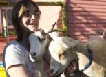 novella_goats